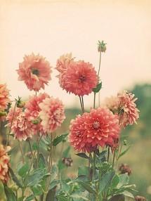 flowers-tumblr-flowers-33623905-360-480