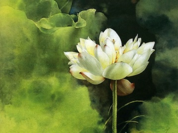 painting-flower-brush-water-lily