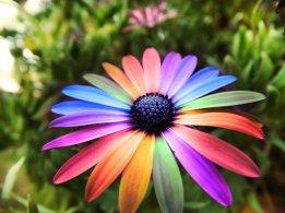 flower-07