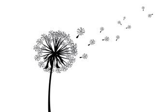 scattered-dandelion-silhouette