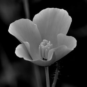 flower-396293_960_720