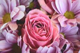 flowers-love-roses-pink-rose