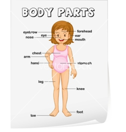 body-parts-diagram-poster-vector-995705.jpg